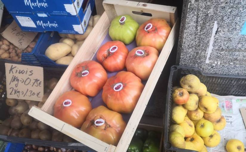 Los tomates gigantes en pleno mes deenero