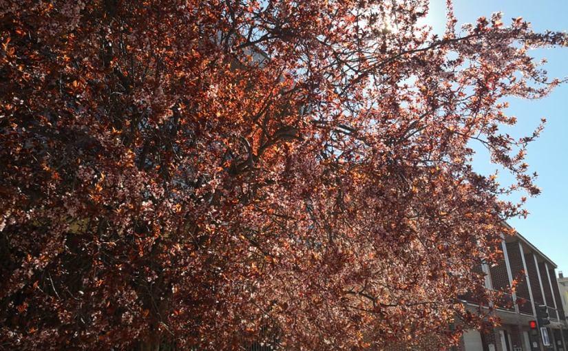 Llegó la primavera a la ciudad, todo ha cambiado de color (o casi) con superluna degusano