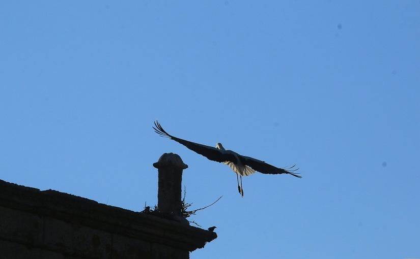 La cigüeña reencarnada que sobrevuela sobre su casa y vela por mi (gracias porexistir)