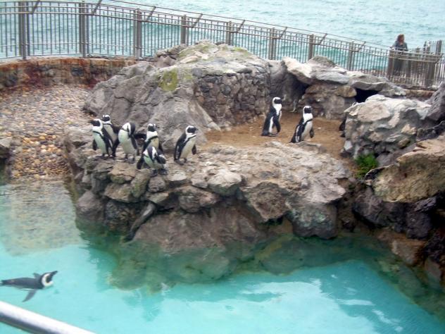 Los torpes y diminutos pingüinos del zoo de LaMagdalena